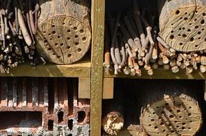 Potager Ste Agathe hotel insectes © Urbanisme Ville de Liege  JP